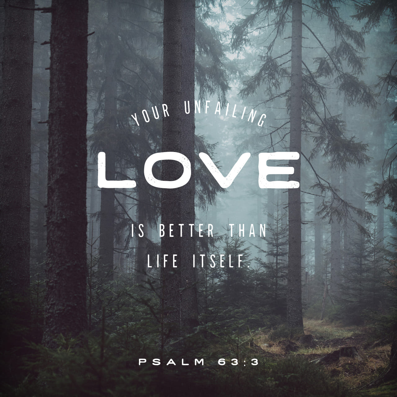 Psalm 63 3 Because Your Steadfast Love Is Better Than Life My Lips Will Praise You English Standard Version 2016 Esv Download The Bible App Now