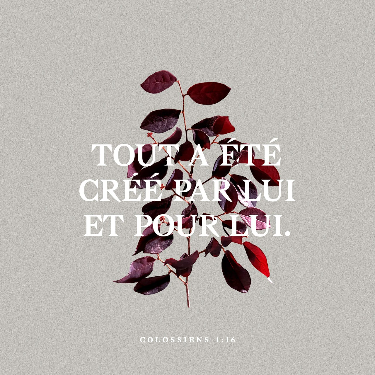 Lettre aux Colossiens 1:15-20 Le Christ est l'image du Dieu qu'on ne peut  voir. Il est le Fils premier-né au-dessus de toutes les choses créées. En  effet, c'est en lui que Dieu