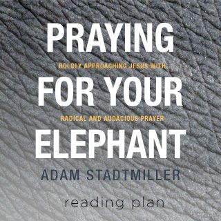 Bidden voor je olifant - Gedurfde gebeden bidden