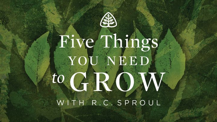 Five Things You Need To Grow