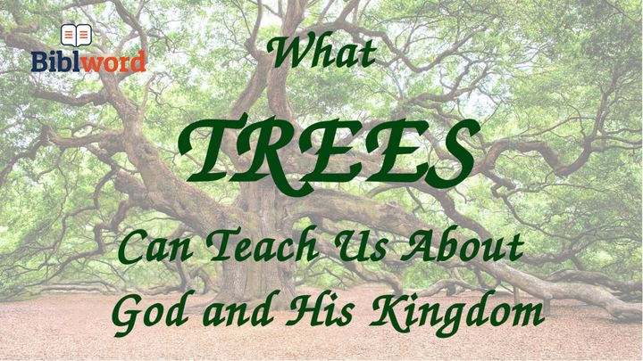 What Trees Can Teach Us About God and His Kingdom