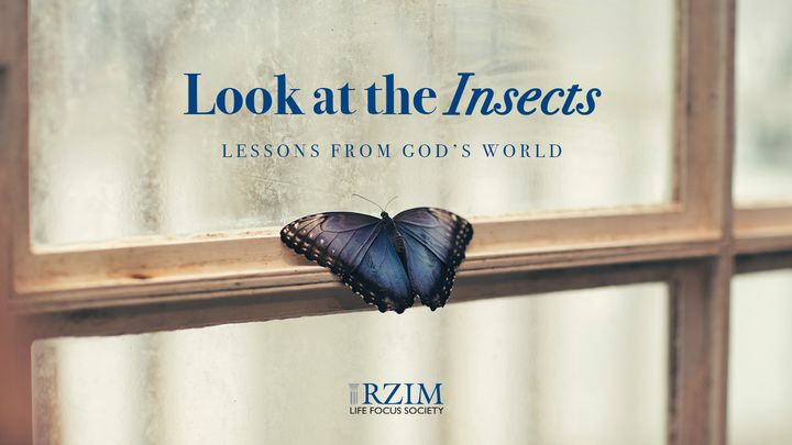 Look at the Insects: Lessons From God's World